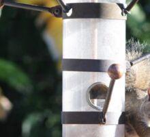 Squirrel On Backyard Bird Feeder Sticker