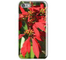 Poinsettia Flower on a Bush iPhone Case/Skin