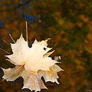Leaf exchange by MarianBendeth