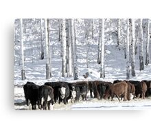 Cattle Country Canvas Print