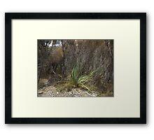 Brush On Bullock Hill Framed Print