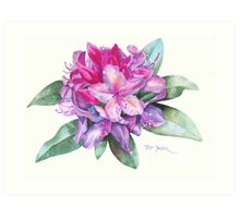 Washington Rhododendron Art Print