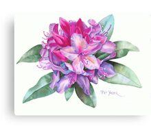 Washington Rhododendron Canvas Print