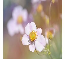 Anemones in the Garden, #flower, #floral, #nature Photographic Print