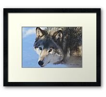 ....the eye of the Wolf ....(click to see large) Framed Print