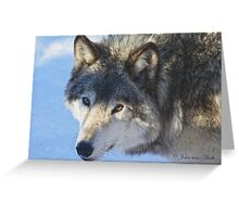 ....the eye of the Wolf ....(click to see large) Greeting Card