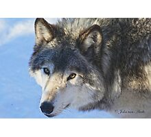 ....the eye of the Wolf ....(click to see large) Photographic Print