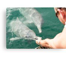Hand Feeding the Dolphins Canvas Print