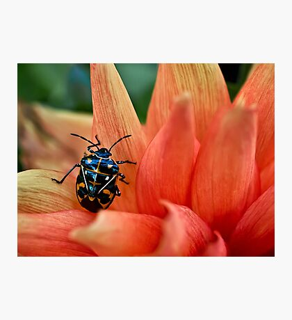 Fashion-conscious bug Photographic Print