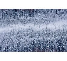 Frozen forests Photographic Print