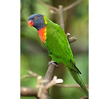 A Lorikeet in Singapore Photographic Print