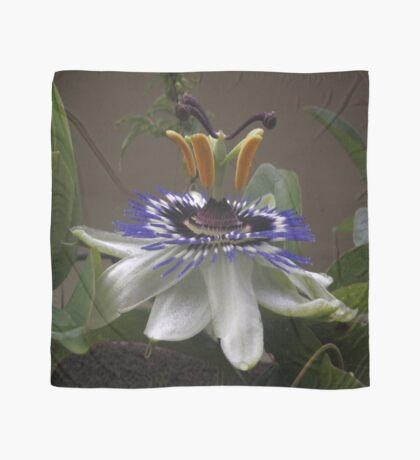 Side View of Beautiful Passiflora Flower Scarf