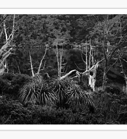 Alpine Forest, Tasmania 1 Sticker