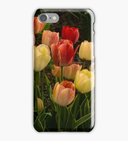 Multicolored Tulips - Enjoying the Beauty of Spring iPhone Case/Skin
