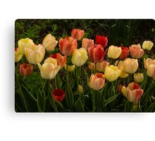 Multicolored Tulips - Enjoying the Beauty of Spring Canvas Print