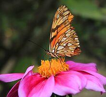 Butterfly Pollinating a Purple Flower by rhamm