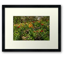 Untamed Tulip Garden - Enjoying the Beauty of Spring Framed Print