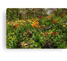 Untamed Tulip Garden - Enjoying the Beauty of Spring Canvas Print