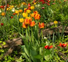 Untamed Tulip Garden - Enjoying the Beauty of Spring Sticker