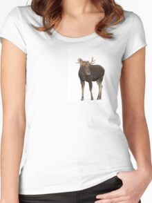 Moose in winter Women's Fitted Scoop T-Shirt
