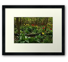 Bright Yellow and Red Tulips in the Forest - Enjoying the Beauty of Spring Framed Print