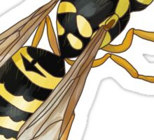 Yellow Jacket | Vespula maculifrons Sticker