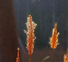 Grass Fire by Eileen McVey