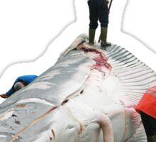 Whales butchering Sticker