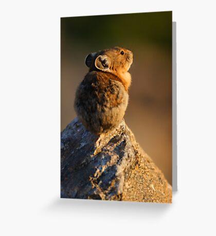 Sunset Pika Greeting Card