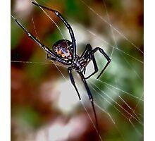 I 'm Watching You  ( Black Widow series) Photographic Print