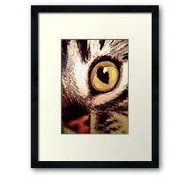 Katze Framed Print