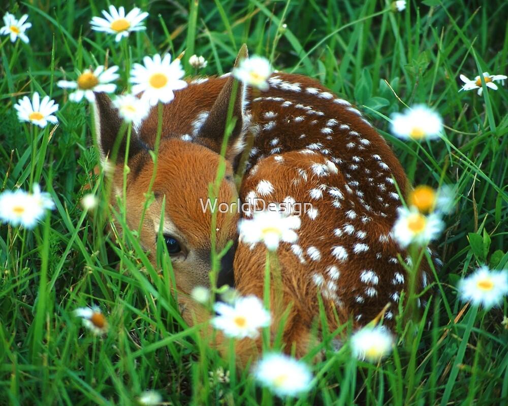 Fawn & Wildflowers by Sheri L Gladish