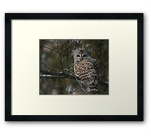 Silent in the snow Framed Print