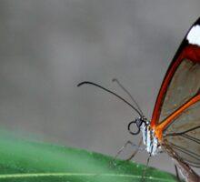 Glasswinged Butterfly Sticker