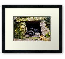 Wild animal Framed Print