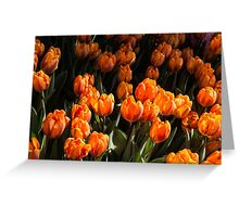 Flame Colored Tulips - Enjoying the Beauty of Spring Greeting Card