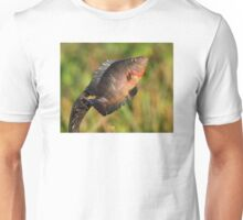 Anhinga Displaying Meal Unisex T-Shirt