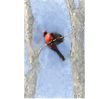 Water Color Cardinal Photographic Print