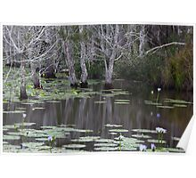 Cattai wetlands, reflections. Poster