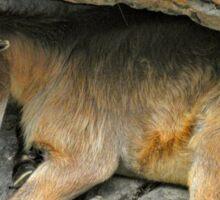 Hiding Ibex Sticker