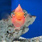 Fish Smiles by paulineca