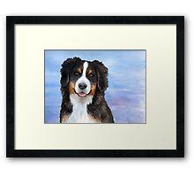 Dog 125 Bernese Mountain Framed Print