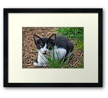 tuxedo kitten  Framed Print