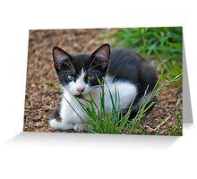 tuxedo kitten  Greeting Card