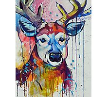 Funk and Fauna Deer Photographic Print