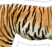 Giant Realistic Flying Tiger Sticker