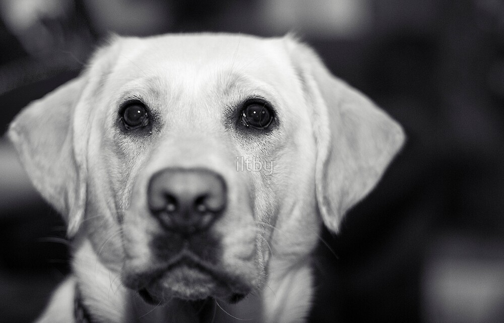 Puppy Dog Eyes II by Josie Eldred