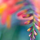 Polychromatic II by Josie Eldred