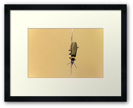 Tightrope by Josie Eldred