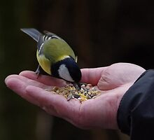 Feeding the Great Tit by Deb Vincent